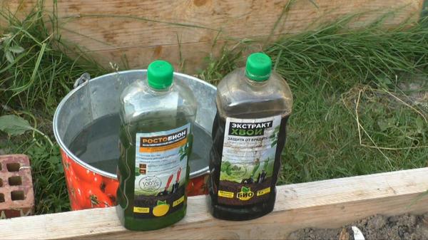 Как увеличить урожай огурцов: биопрепараты в помощь дачникам