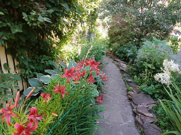 В середине лета сад особенно красив. Фото автора