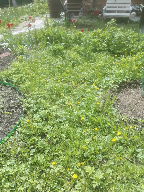 Здесь был газон, теперь он зарастает сорняками