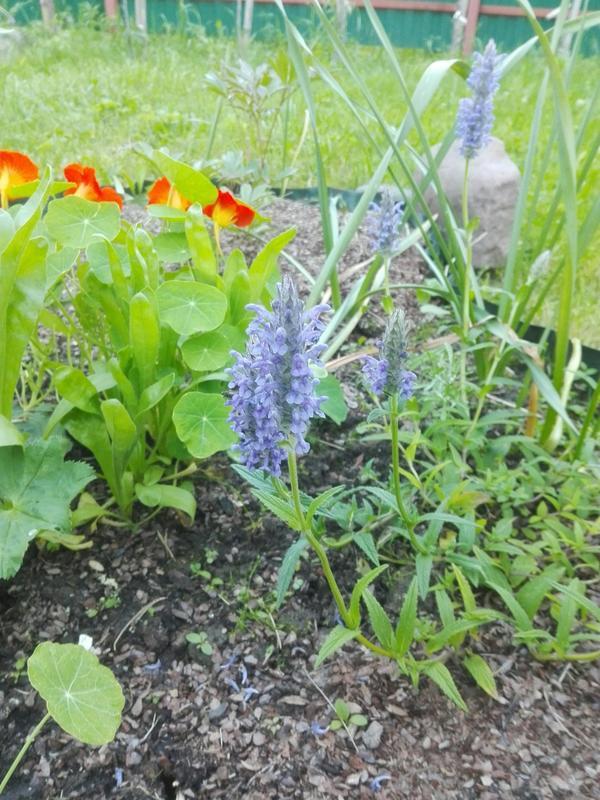 Цветы поближе