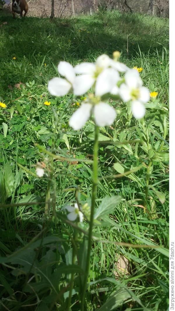 сорняк семена как иголки