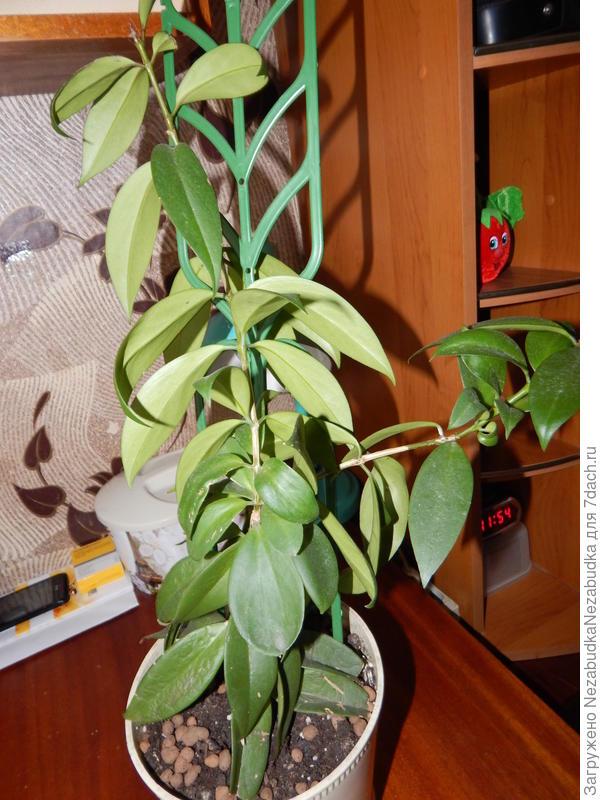 Неизвестное растение№2