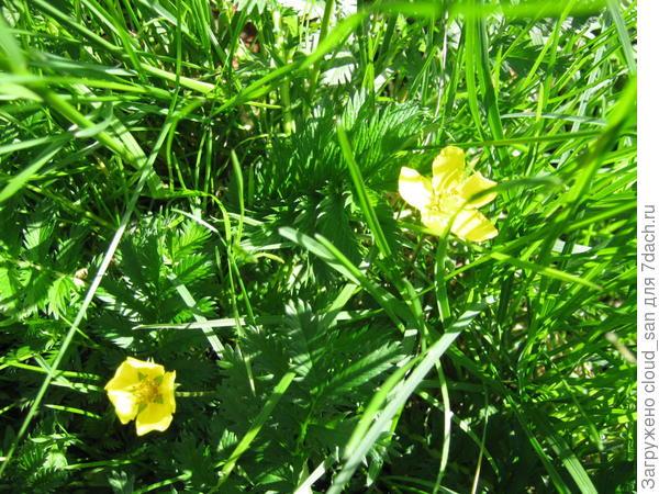 Солнышки в траве