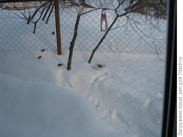 Это прошлой зимой. Нынче снега нет.