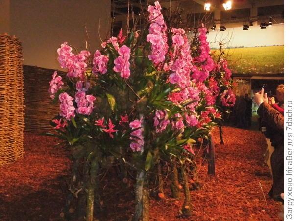 """Эти деревья """"сделаны"""" из орхидей"""