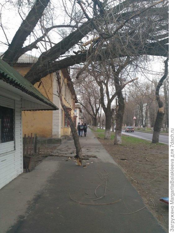 и так по всему городу - деревья попадали.