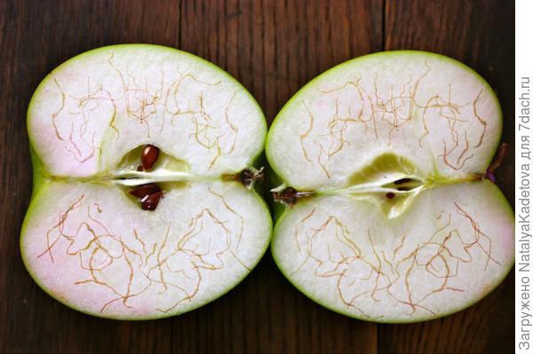 Вот так приблизительно выглядели мои яблоки в разрезе. Ходы я нарисовала сама, мне кажется, довольно похоже :)