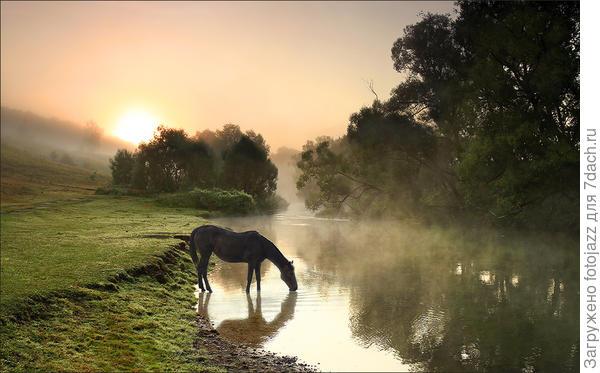 Нетрудно свести лошадь к воде. Но если вы заставите ее плавать на спине - вот это значит, что вы чего-то добились! Артур Блох, ЗАКОНЫ МЕРФИ