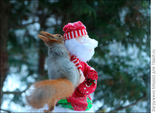 и тогда жадный белк на ухо потребовал у Деда мешок орехов к Новому году.