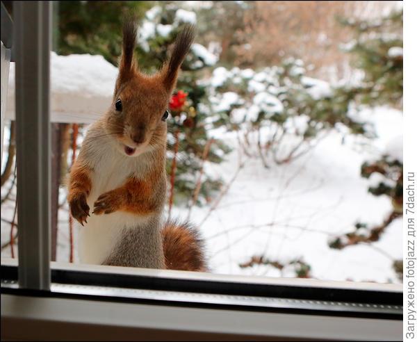 -Ты,мужик,орехи давай А за семечки пусть у тебя Бобик,в смысле воробьи пусть снимаются...