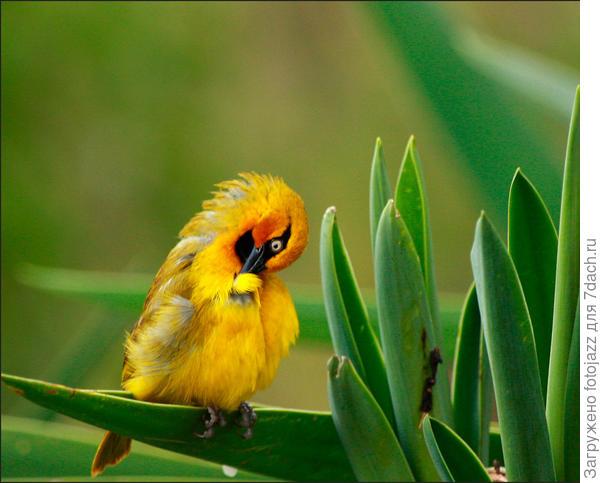 а перья,похоже, с этой несчастной птахи понадёргали...