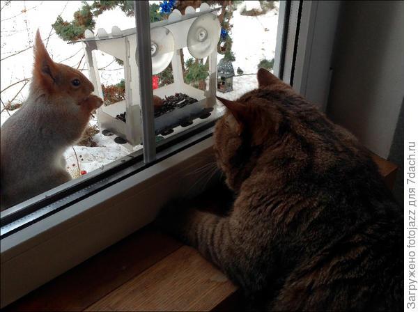 Они почти дружат:)