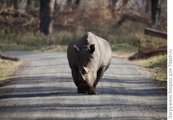Не очень приятная встреча на дороге:)