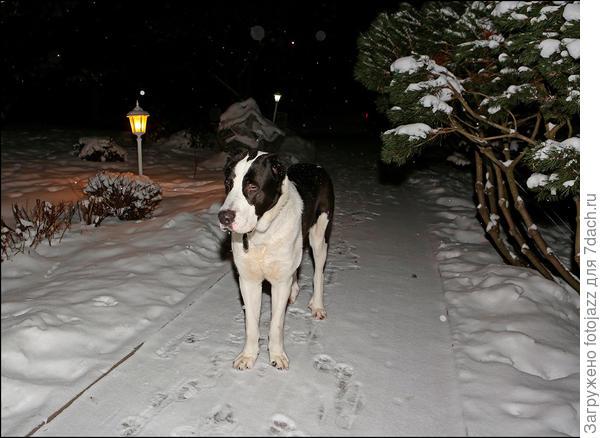 А если повернуть за угол то нас встречает еще один член семьи - щеночек Тор,который каждую ночь прибегает к нам от старшего сына,который живет напротив через прудик.