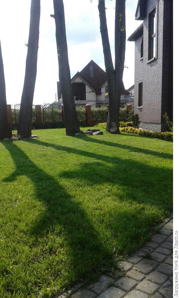 Вот как газон выглядит сегодня