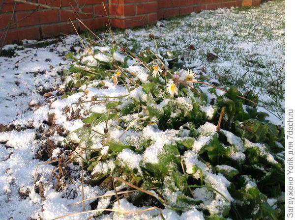Бывает красиво и без снега, не спорю (фото 3 января)