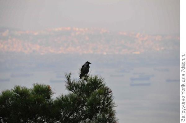 Вот одна из них. Вдалеке двадцатимиллионный Стамбул