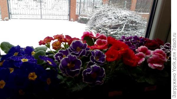 Март преподнёс сюрприз в виде снега. А ведь вчера на улице было + 10