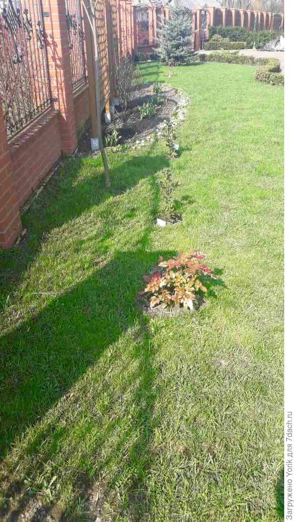 Вот так растения выглядели ранней весной