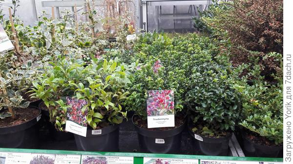 Несмотря на календарь растения продают