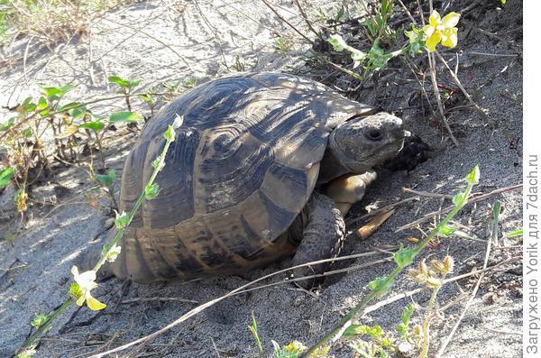 Да еще и черепахи в тенечке отдыхают