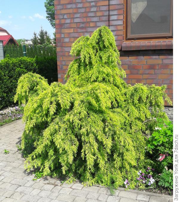 У растения довольно экстравагантный вид