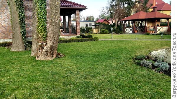 Вот так должен выглядеть газон в январе (шутка)