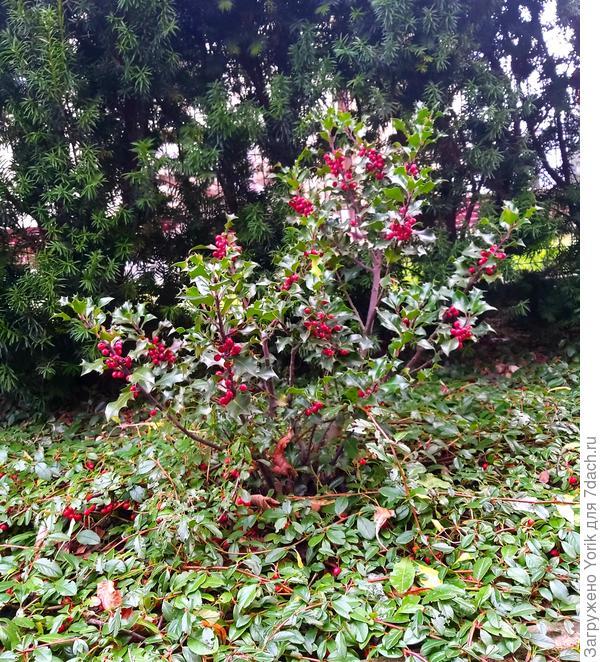 Клумба которая фактически не меняет свой облик в течение всего года. Только на время цветения.