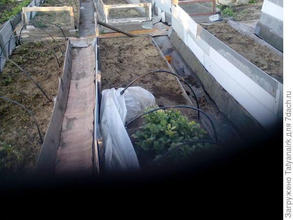 Чисто, грязь в дом не носится, под между рядным покрытием влага сохраняется. Для нас больше преимуществ, чем недостатков