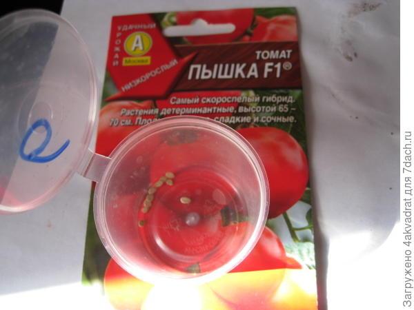 Семена томата, замоченные в Стимиксе