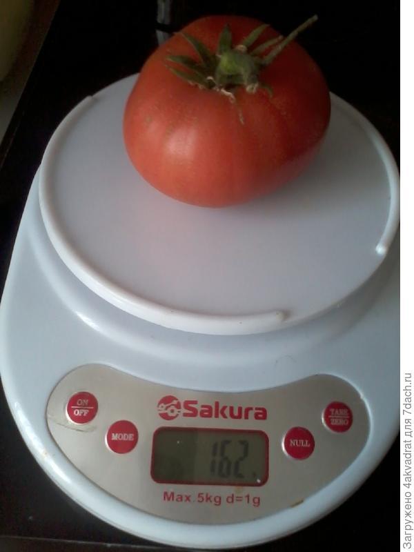 Вес первого плода