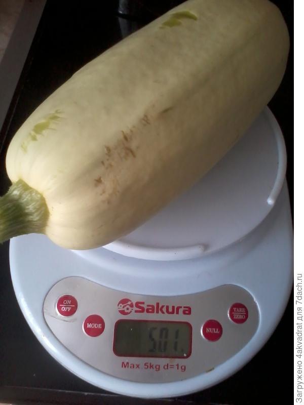 Вес в граммах