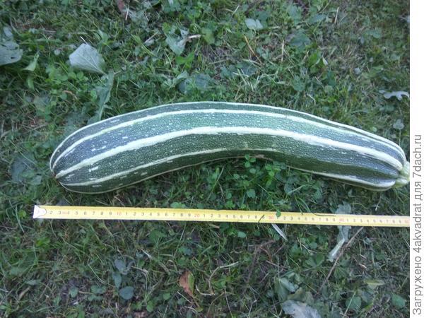 А это уже рост в сантиметрах, в граммах фото нет, так как весы работают до 2 кг и на этом тигренке зашкалили.