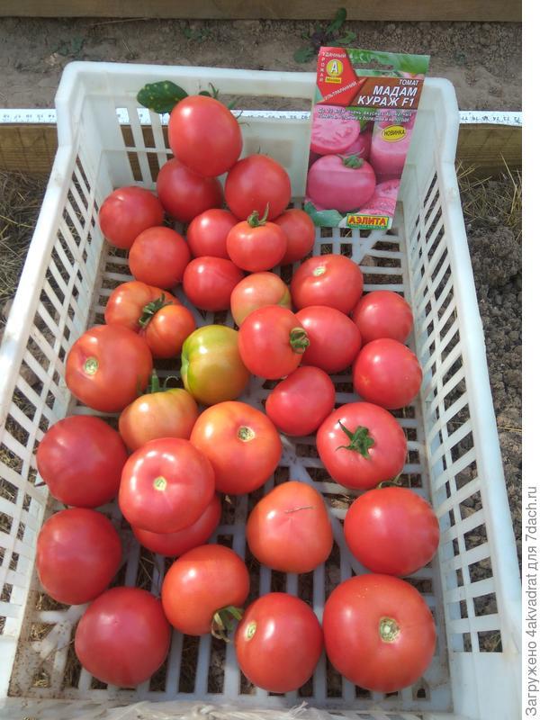 урожай, собранный 25 августа