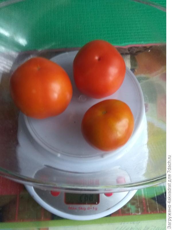 Первые зрелые томаты