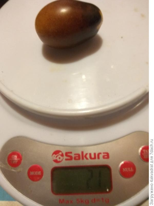 Итоговый отчет. Томат 'Сливовая капля'. А вы точно уверены, что это томат? Его ягоды больше похожи на сливу, особенно когда пробуешь сваренное из него варенье