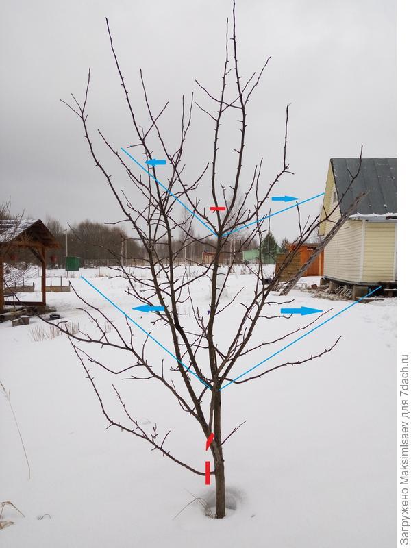 Первое дерево. Красный - отрезать, синий - отогнуть.