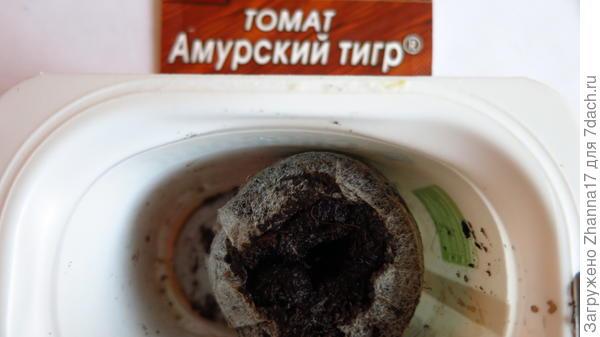 выложила семечко, сверху присыпала грунтом примерно 1 см, верхний слой уплотнила.