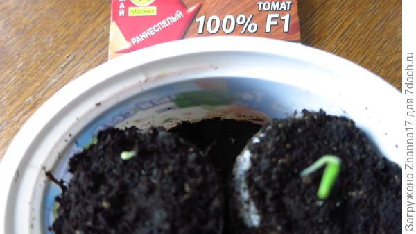Всходы томата 100% в таблетках.