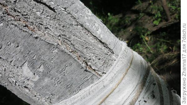 Муравьи продолжают сновать туда-сюда по трещинам под поясом.