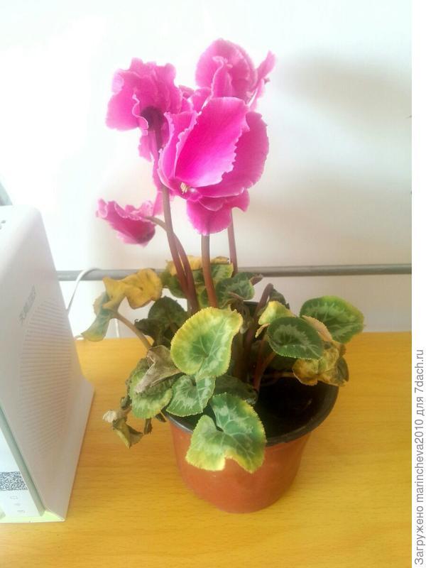 Подарили цветок, название не знаю.