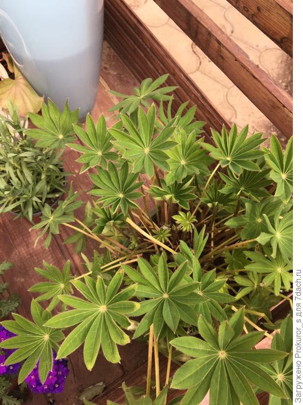 Как это растение называется?
