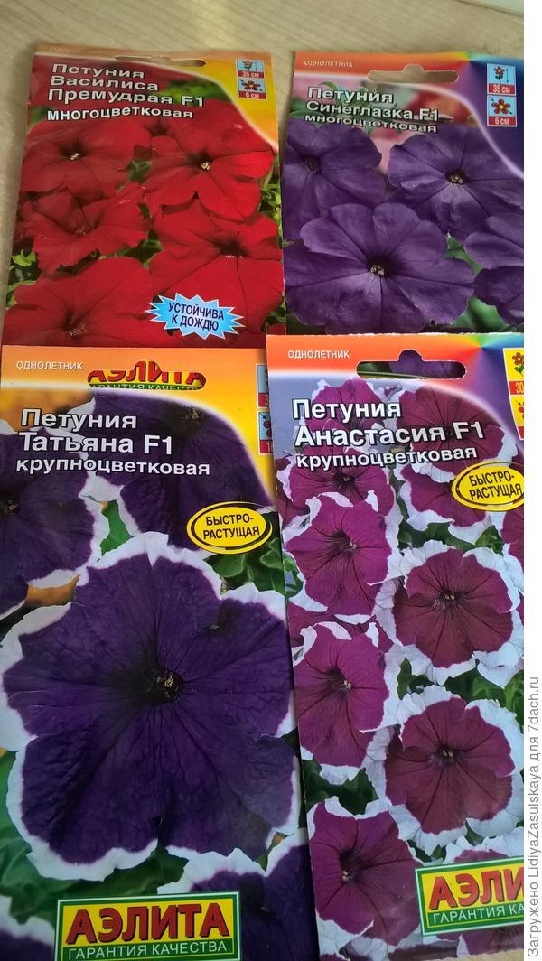 Крупноцветковые Татьяна и Анастасия, многоцветковые Синеглазка и Василиса Премудрая