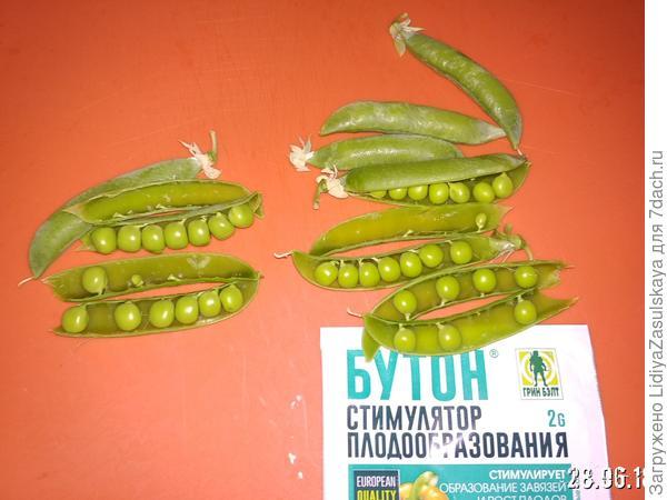 Справа плоды с обработанных растений