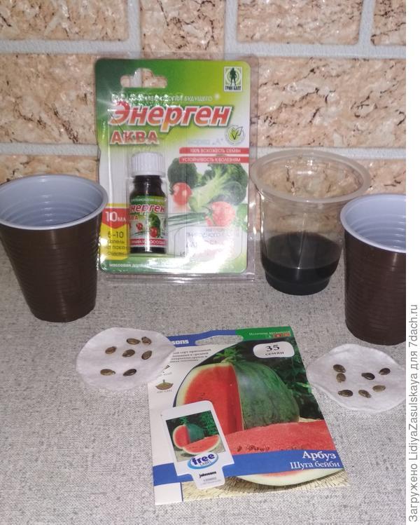 Подготовка арбузов