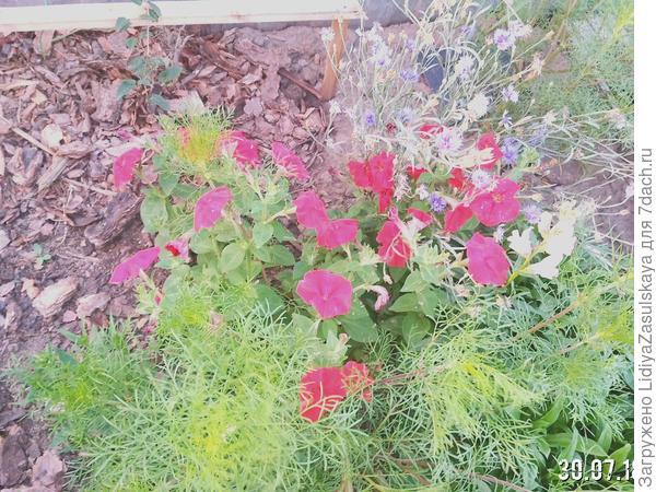 растение не получающее подкормки