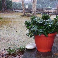 зимой, днём--выносила под снежный душ и просто на воздух, когда не было мороза. Каждую ночь заносила в прохладное помещение .