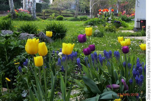 Обожаю апрель и тюльпаны !