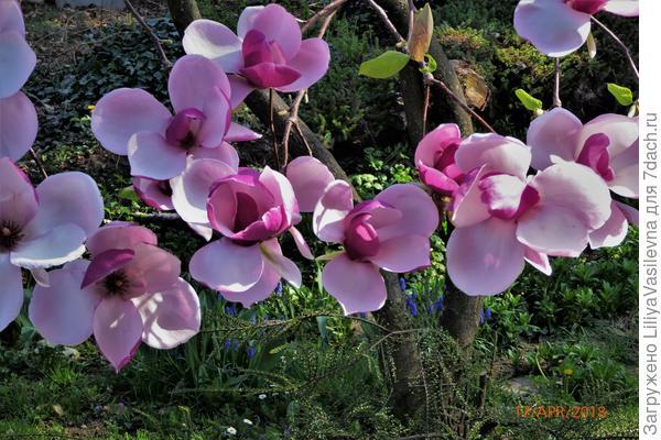 цветы огромные, двумя ладонями не обхватить