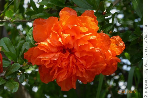 Изумительный цветочек .